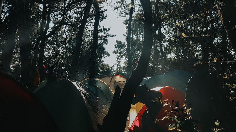 tents under trees