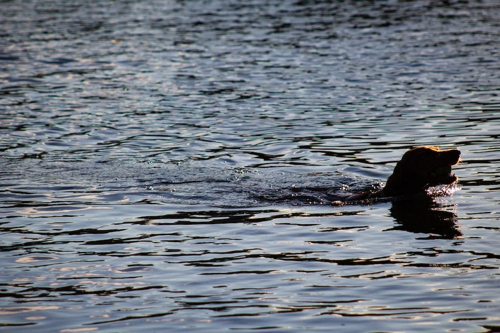 animal in ocean