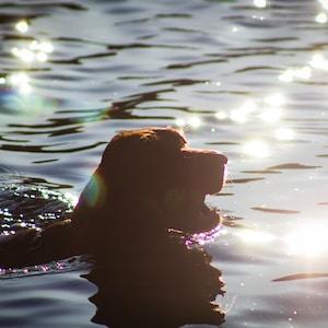 dog in water during daytime