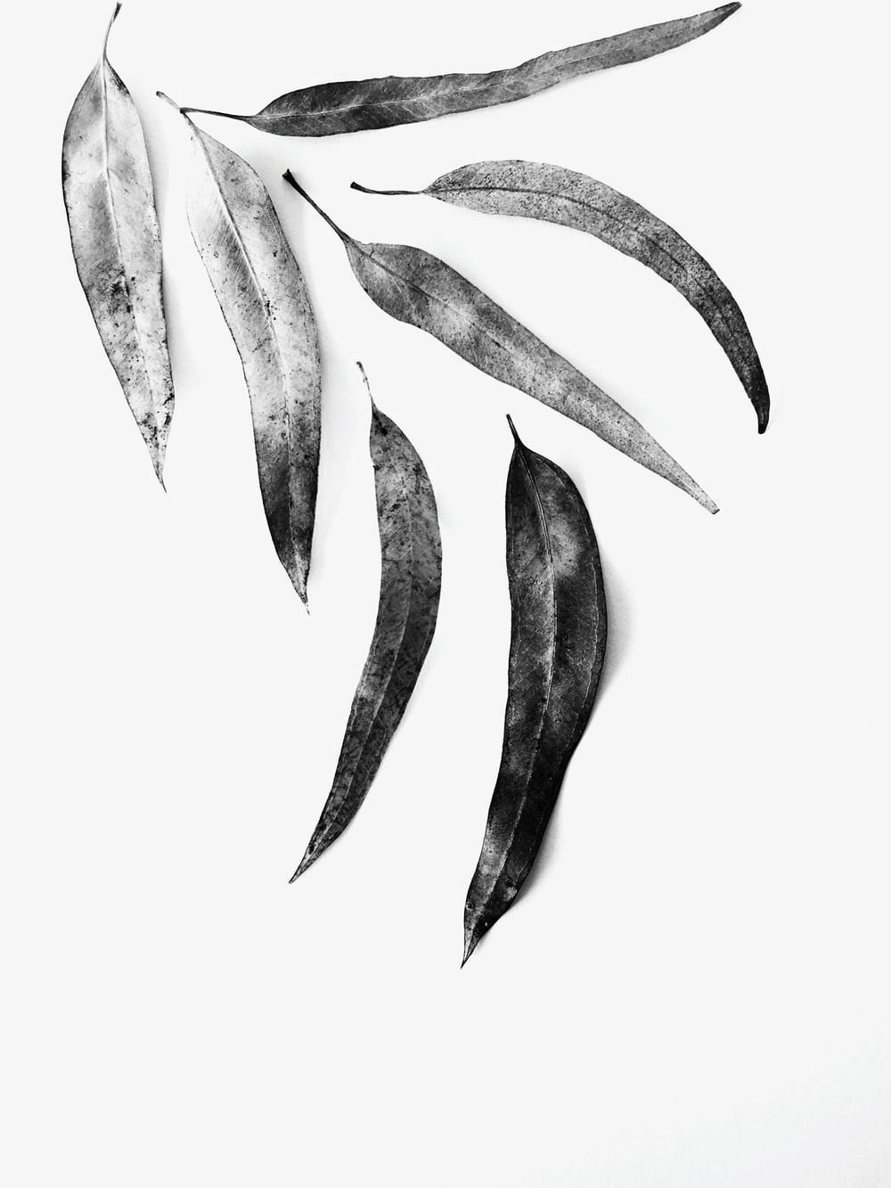 grayscale photo of leaves