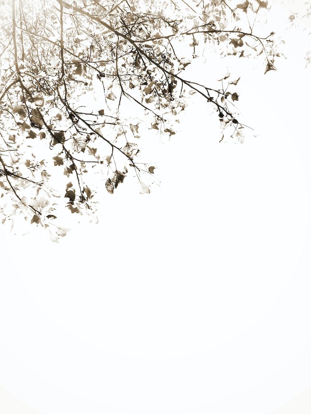green-leafed white-petaled flower tree on white background
