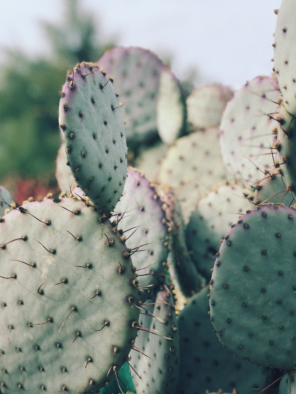 green cactus plants close-up photography