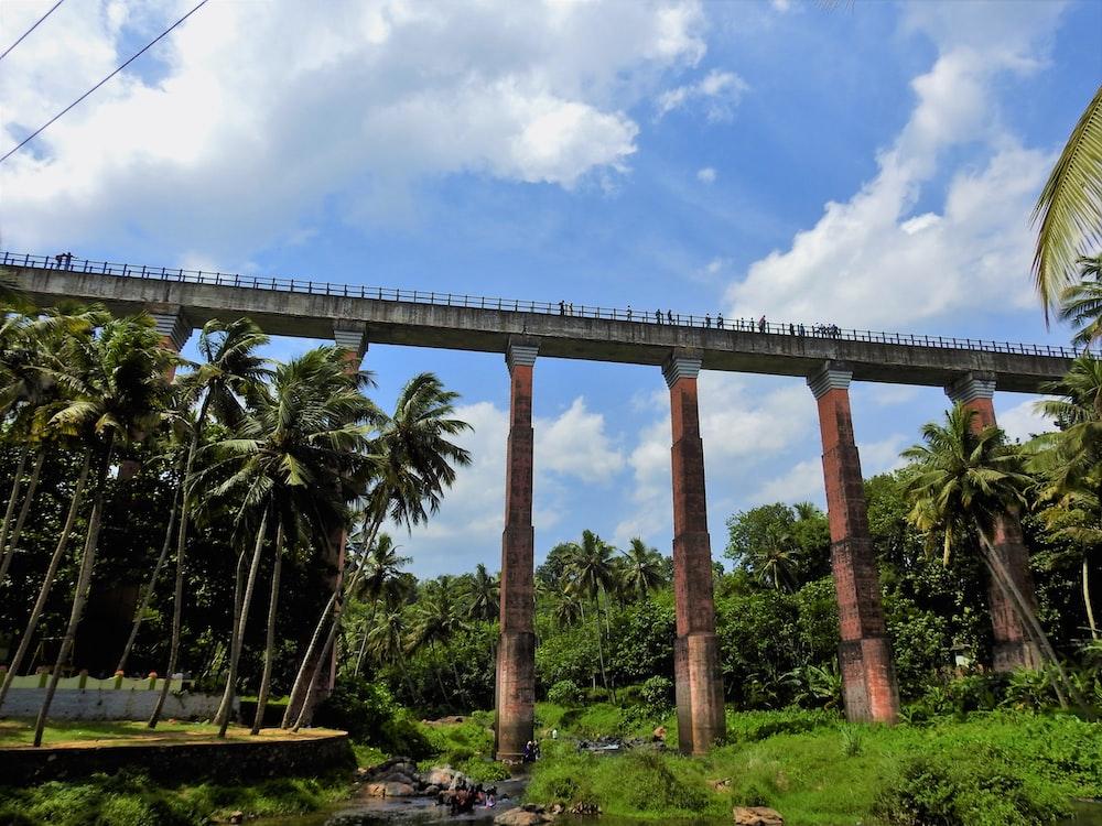 bridge near coconut trees at daytime