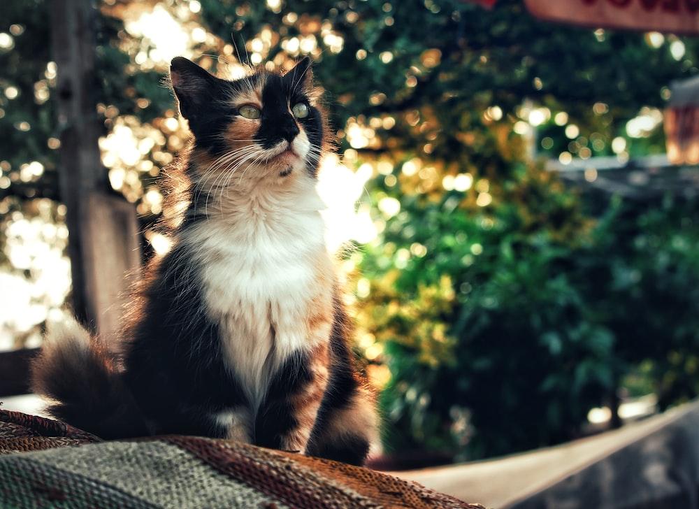 calico cat near trees