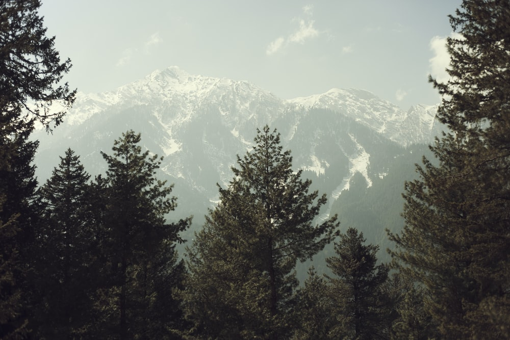 green pine trees at the bottom of the mountain