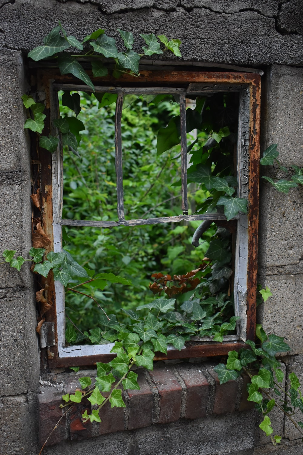 brown wooden window framed with vines