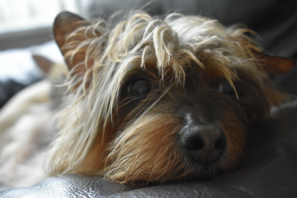 shallow focus photo of long-coated white and brown dog