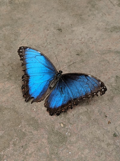 Butterfly@Mariposario in Benalmadena