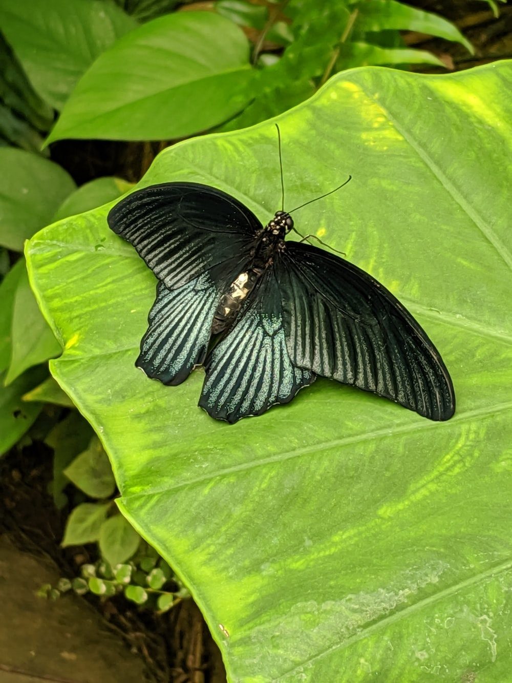 butterfly perching on green leaf