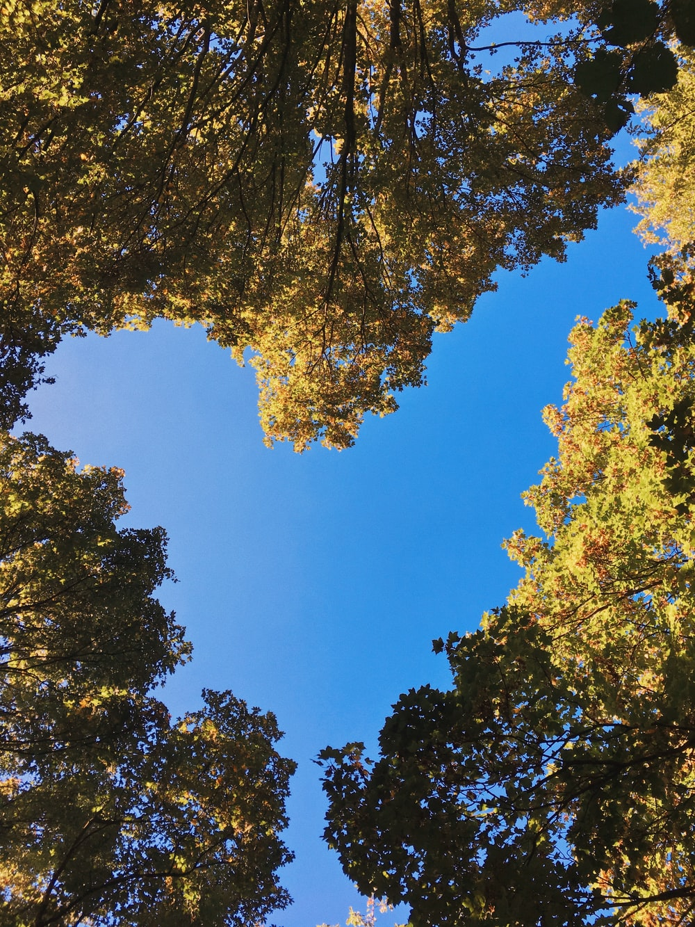 low-angle photo of green-leafed trees