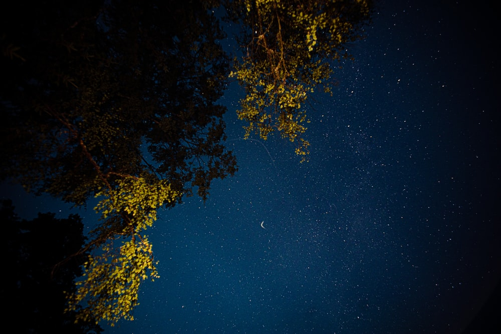 low angle photo of trees during nighttime