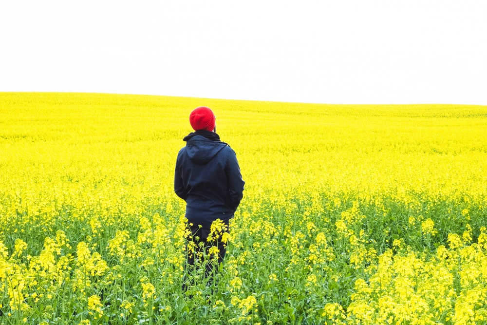 person standing on flower field