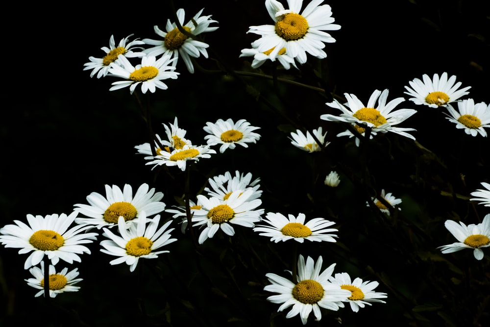 white-and-yellow flowers
