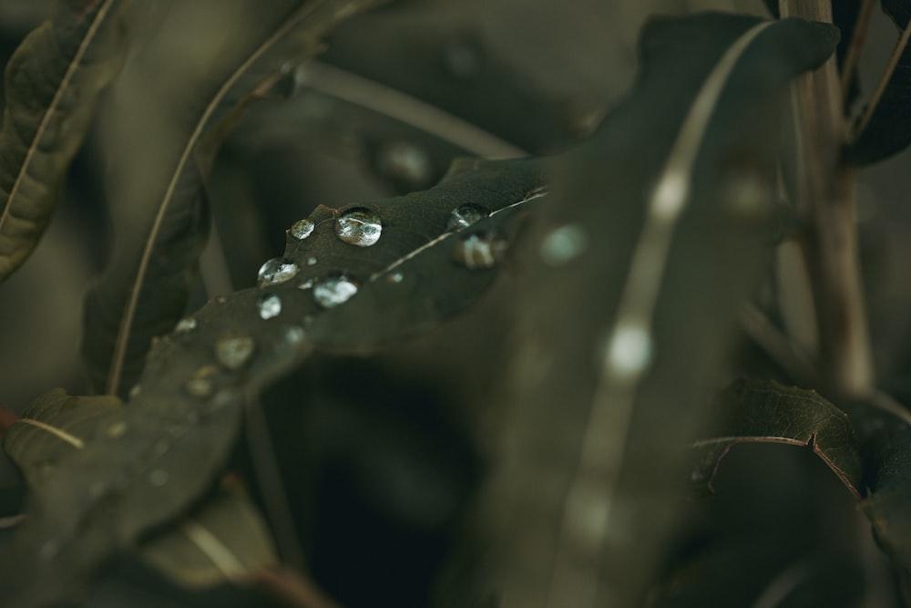 water drops on green leaf plants