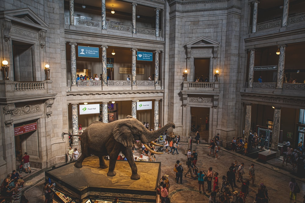 gray elephant statue at museum surrounded by people