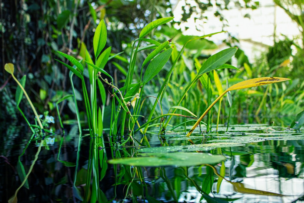 green leaf plants on body of water