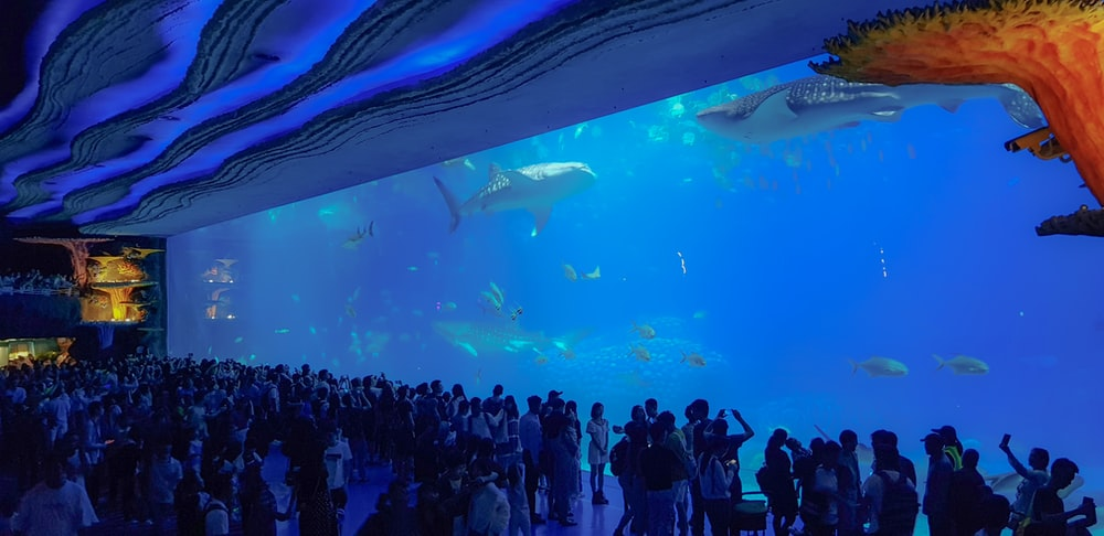 people gathering in front of large aquarium with whales and fishes
