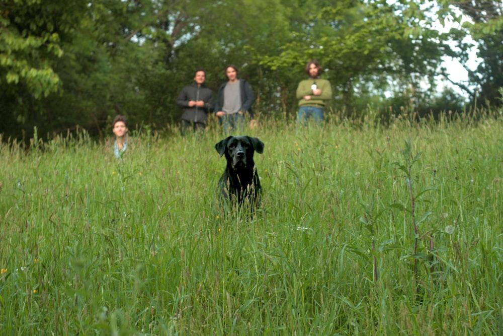 black dog at field