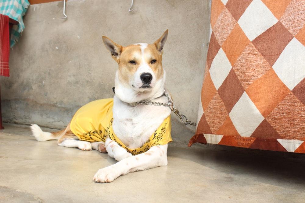 short-coated tan dog