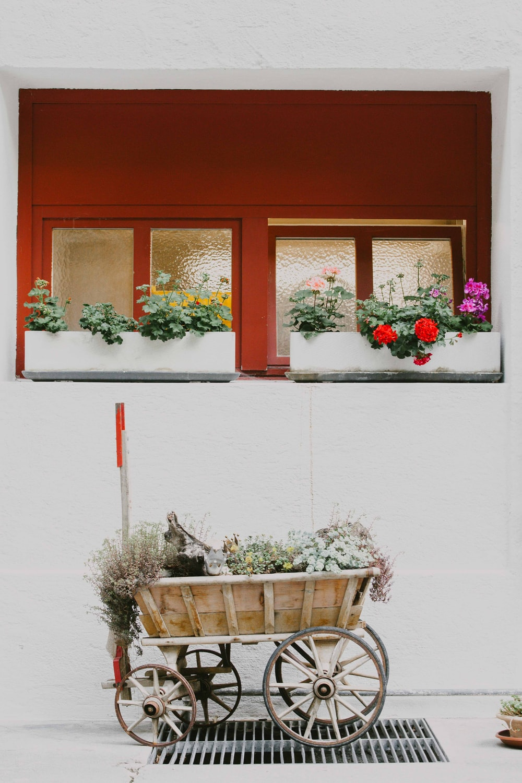 flowers on wheelbarrow
