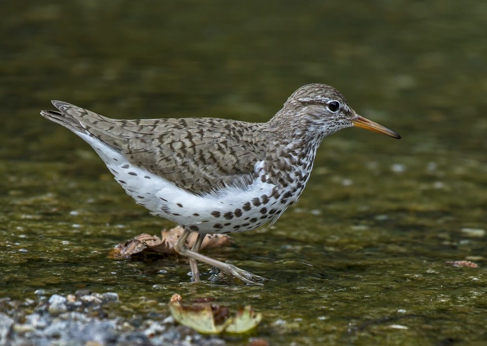 white and brown bird on body of water during daytime close-up photography