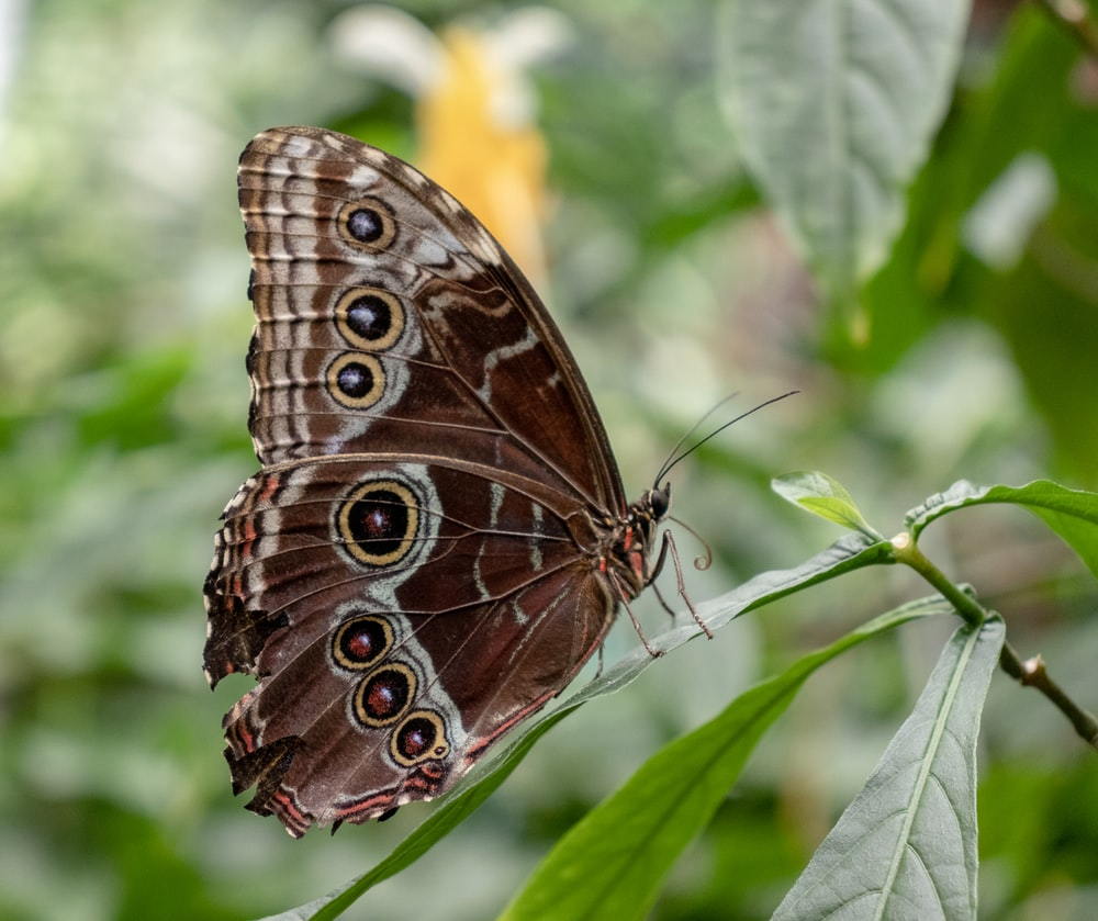 brown butterfly perching on green leaf