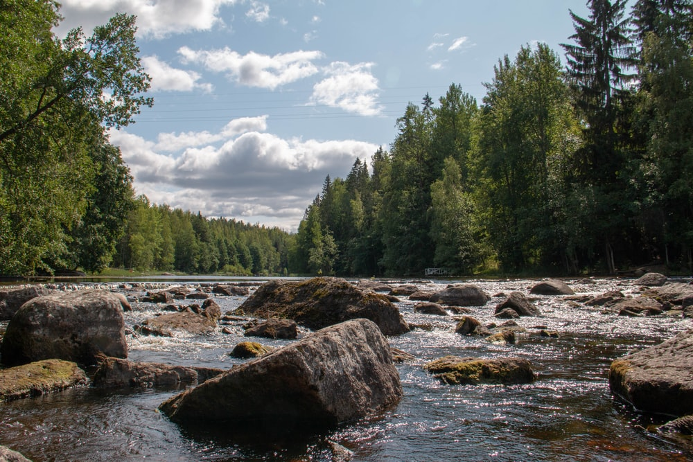 rocky river surrounded with tall trees