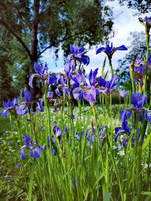 blue flowers during day