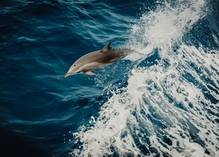 dolphin in water close-up photography
