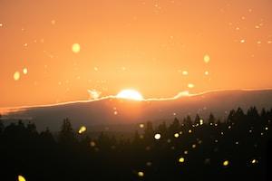 pine trees during sunrise