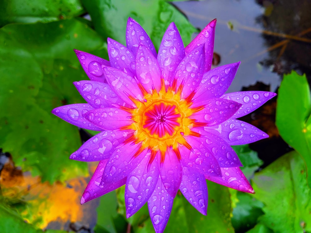 purple-petaled flower