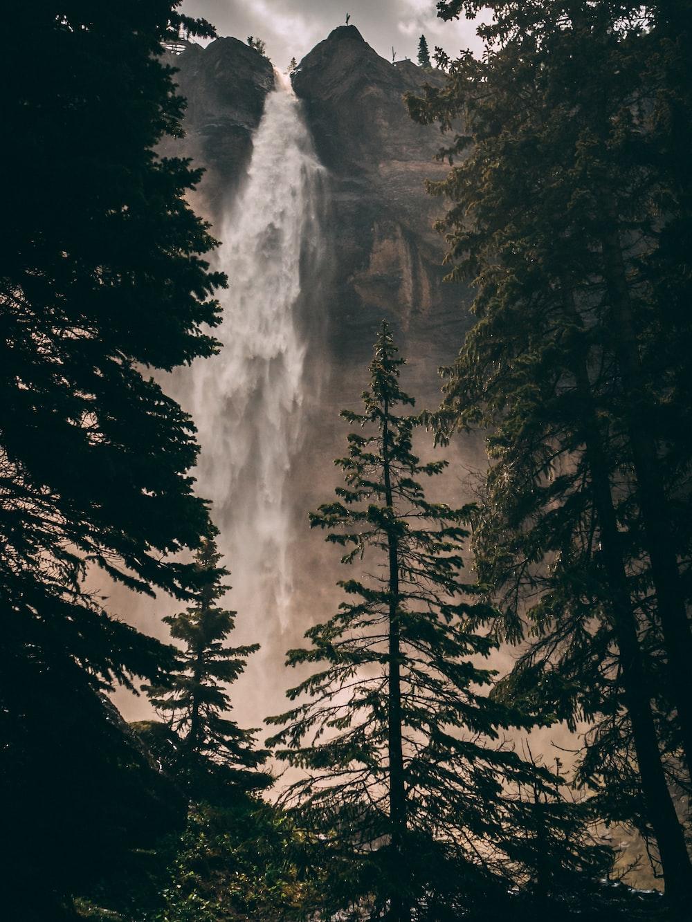 waterfall behind pine trees