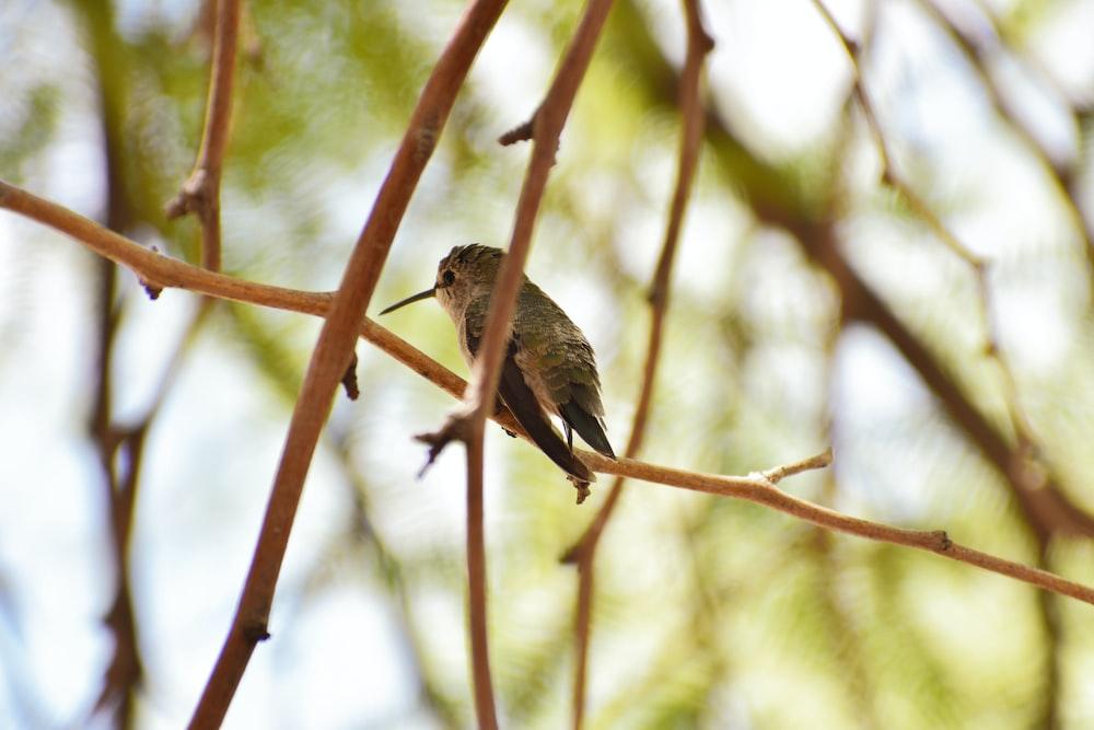 selective focus photo of bird on tree brunch
