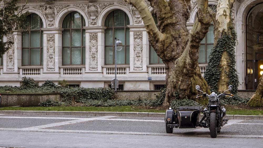 black motorcycle near brown tree