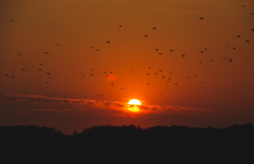 silhouette of flying birds