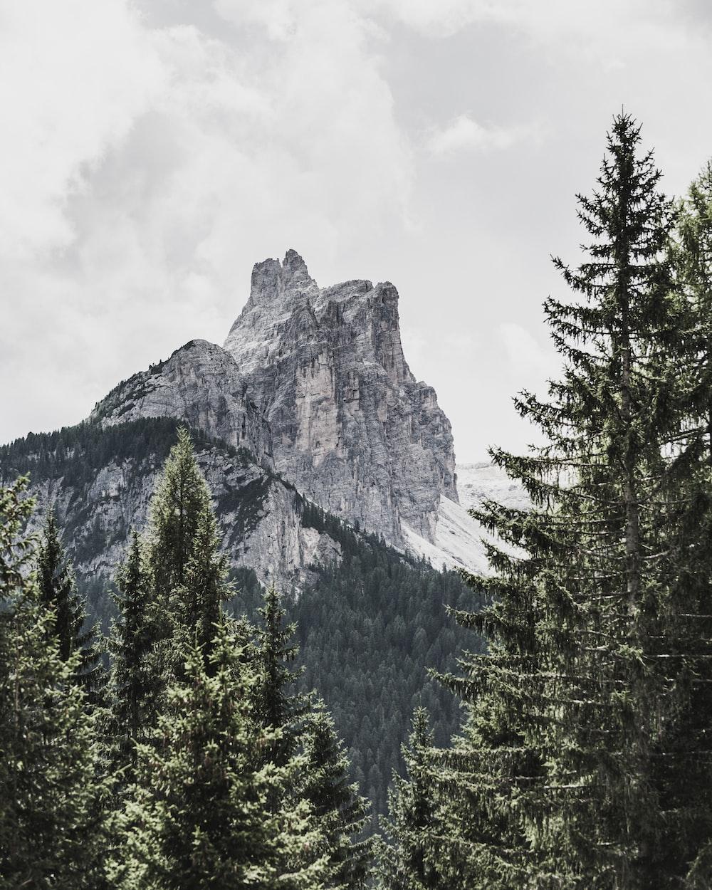 mountains near trees
