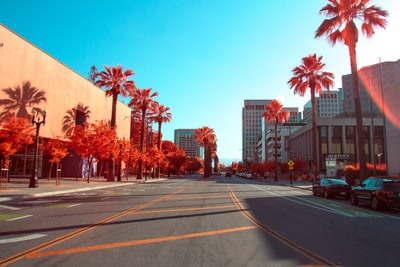 road between palm trees california zoom background