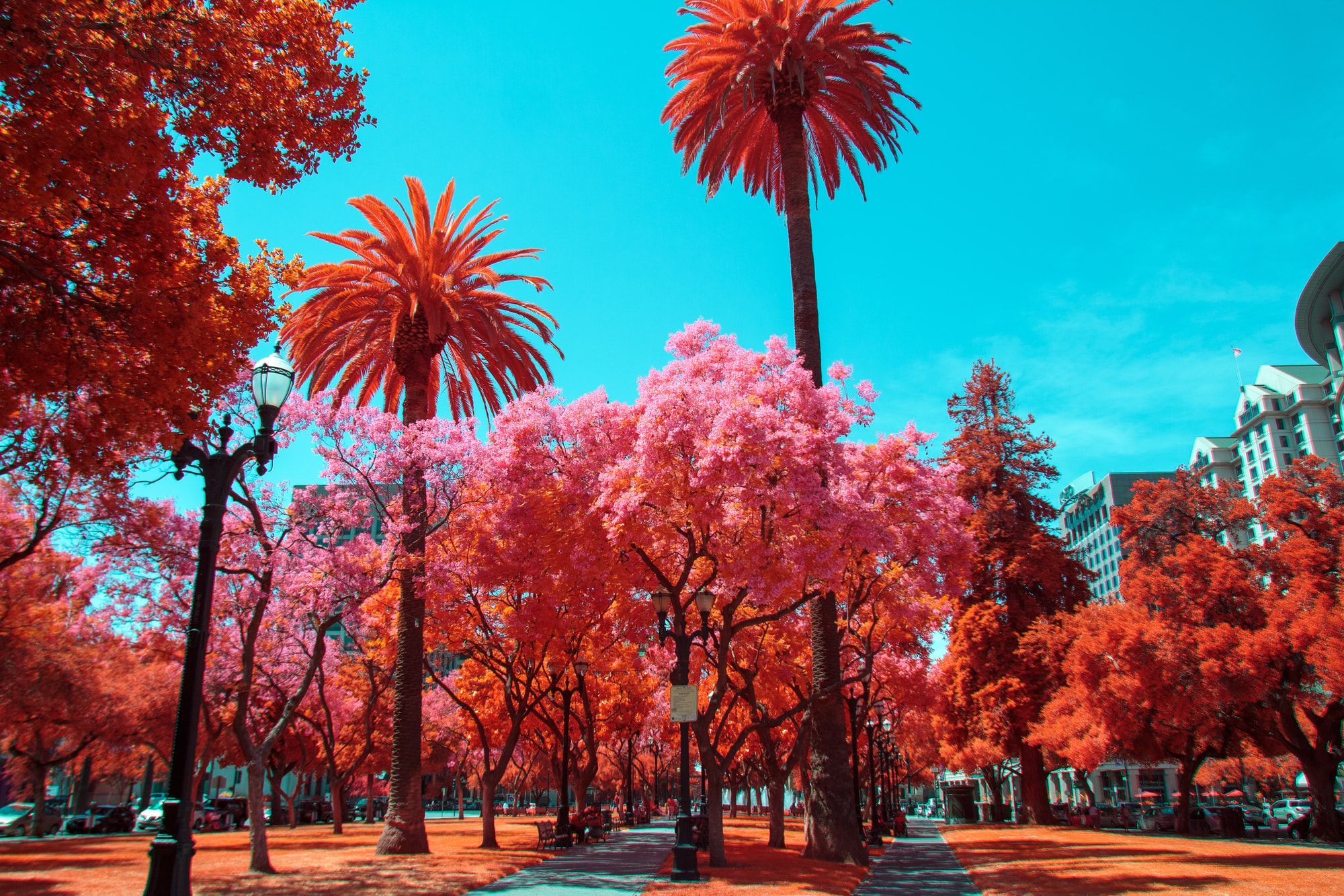San Jose, CA Canon 550d FullSpectrum IRChrome
