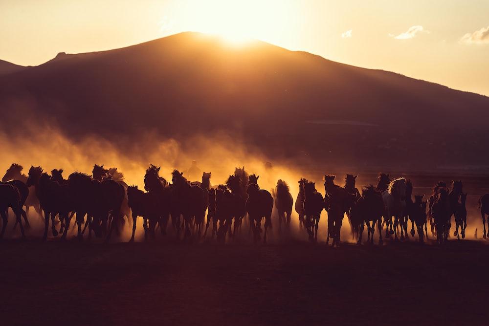 horses running near mountain during golden hour