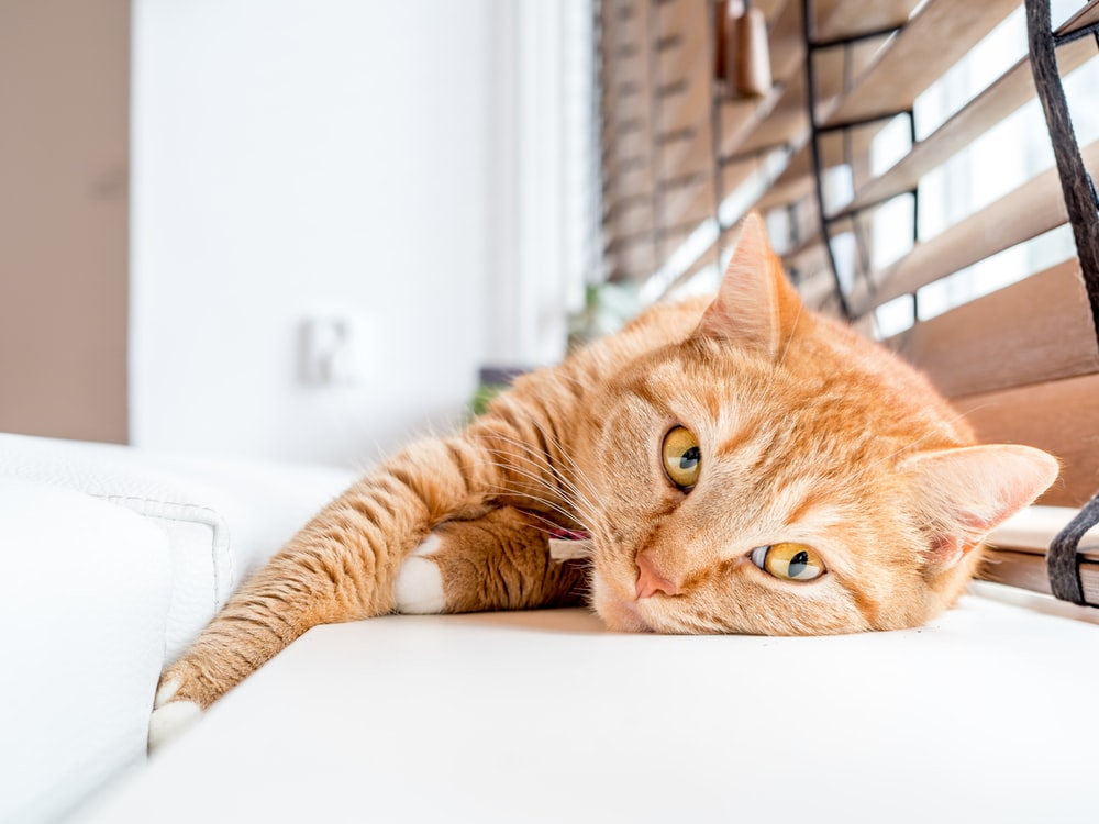 orange tabby cat lying on white surface