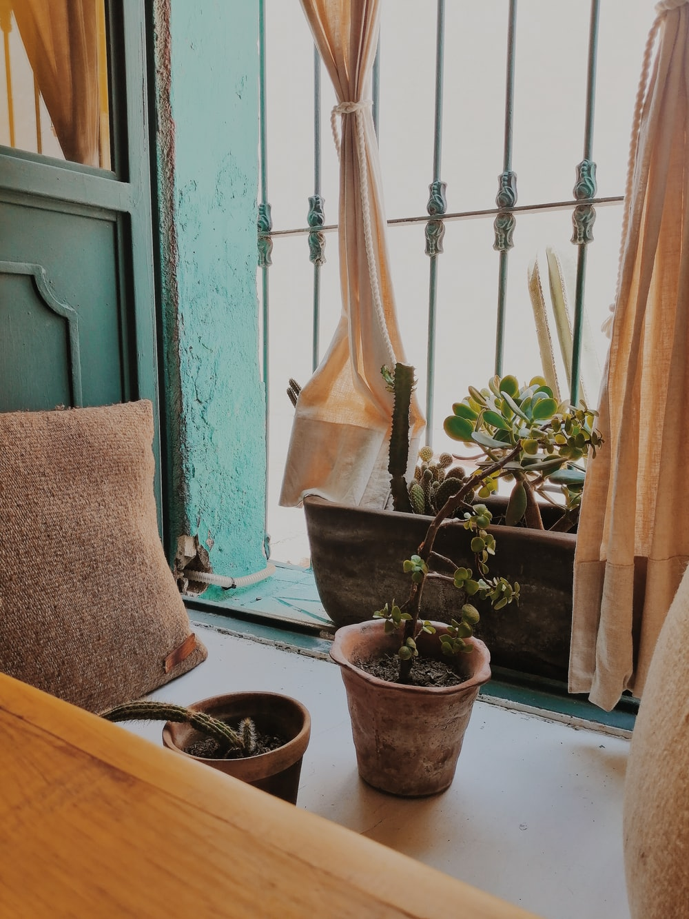 green succulent plant on table