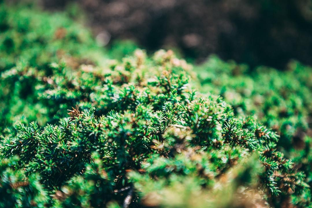 Tiny coniferous bringing some amazing details @ instagram.com/pwellgraf