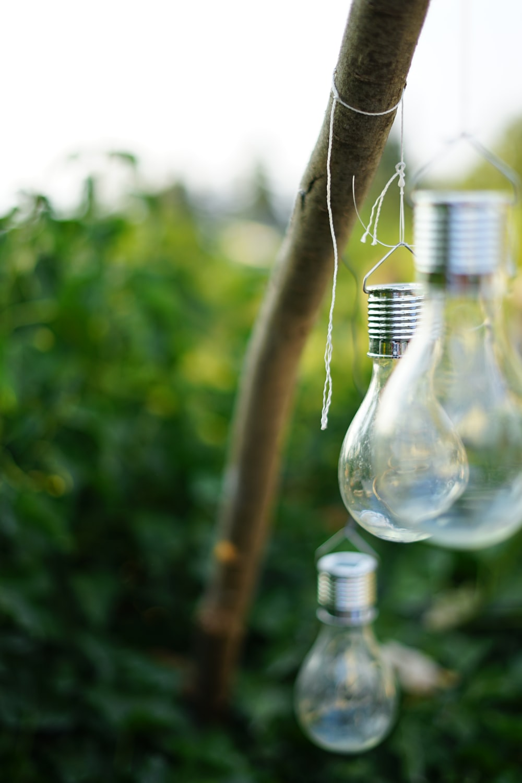 clear glass bulbs