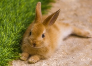 brown bunny near green grass during daytime