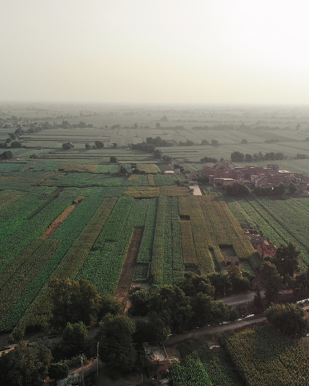 aerial photo of rice field