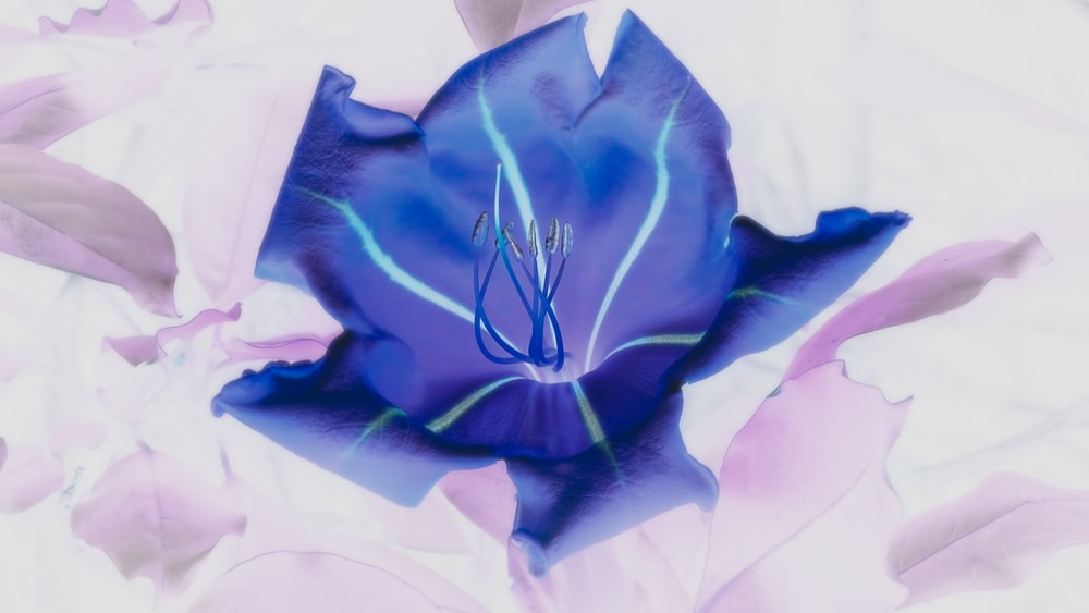 blue petaled flower close-up photography