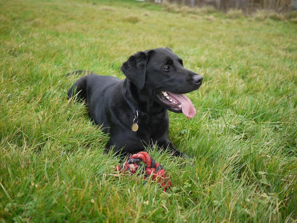 dog on grassy hill
