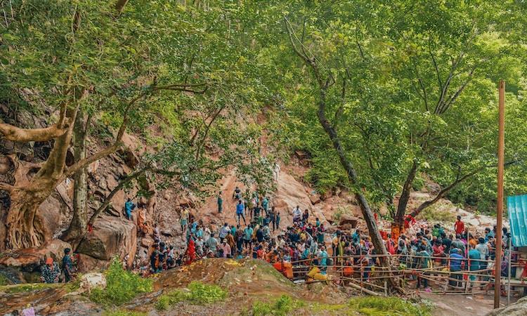 people near tree
