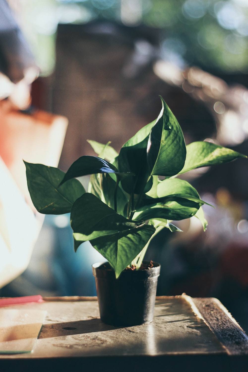green-leafed plant in pot