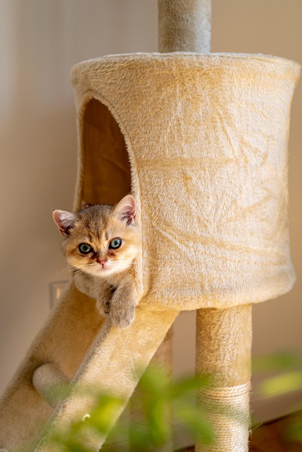 kitten in cat tree